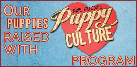 puppy culture program